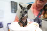 Bushfire-impacted wildlife in care after treatment at Milton Village Vet