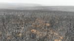 Aerial of WWF walking through Kangaroo Island bushfire aftermath