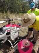 Drone seeding, Aroona QLD
